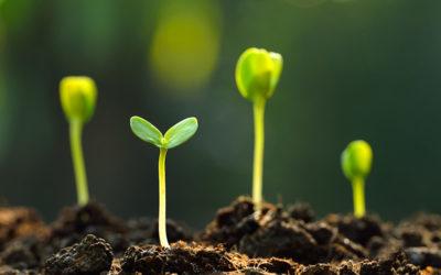 Teil 5: So pflanzen Sie Innovation: Die Leistungen und Erfolge anderer neidlos anerkennen