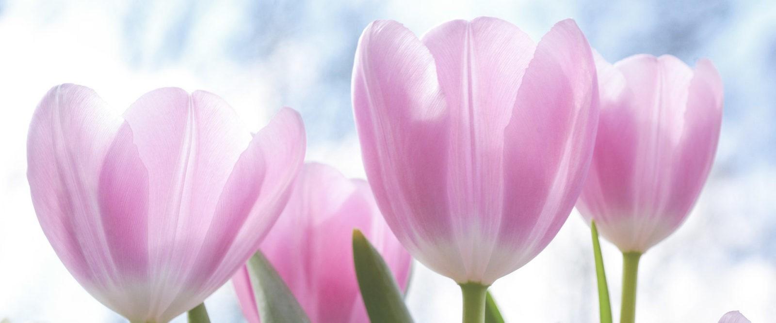 Die 4 Blumen der Grundlagen der Diamantschneider-Prinzipien